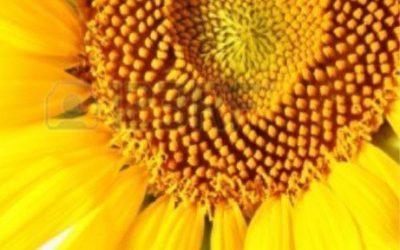 Agosto en Centro Karissa: Ho'oponopono, meditación El Cristal, liberación emocional y superpoderes.