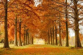 Este otoño cuidamos de tu bienestar